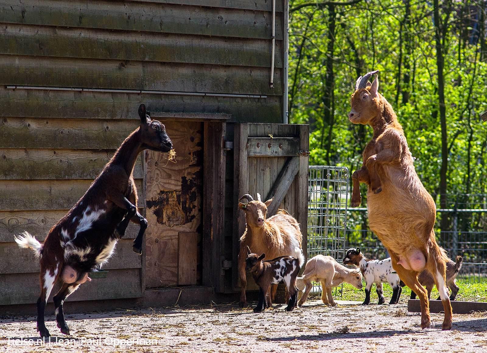 Tiel – Kinderboerderij De Hertenkamp